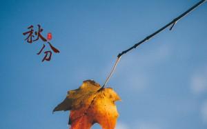 秋分带来一丝微凉