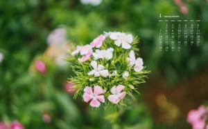 2019年1月清新好看的花卉日历壁纸