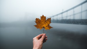 唯美意境枫叶摄影图片桌面壁纸