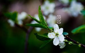 唯美春分节气植物