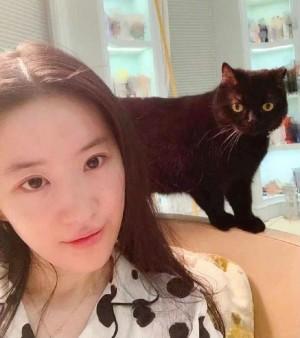 刘亦菲素颜和爱猫自拍