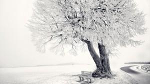唯美雾凇美景壁纸