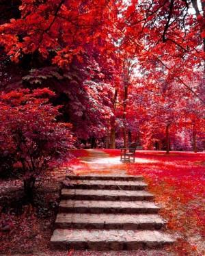 红色枫叶的幸福秋天美景