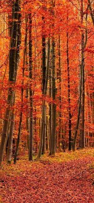 秋日多彩树叶美景高清手机壁纸