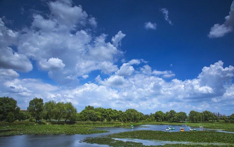 山东胶州湿地公园风景