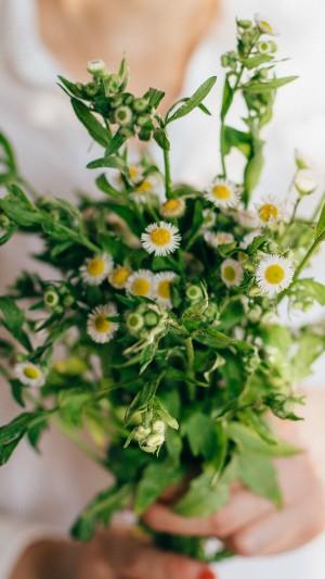 清新文艺静物花卉摄影手机壁纸