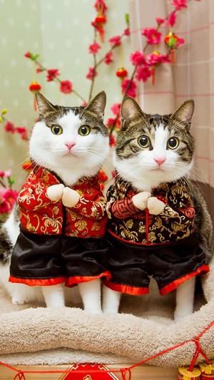 萌寵貓咪唐裝拜年