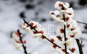 中国传统二十四节气之立冬