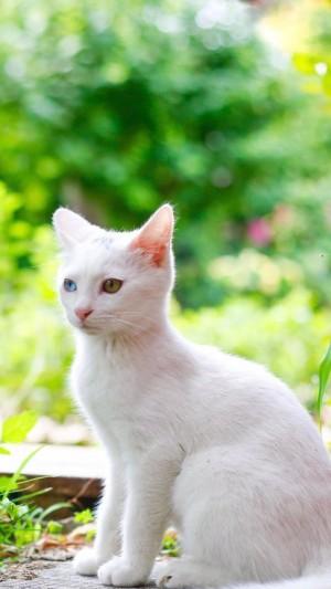 乖巧可爱的猫咪清新图片壁纸