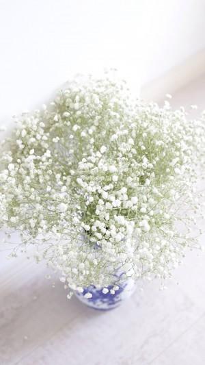 清新白色小花满天星
