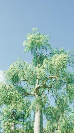 小清新绿色树木养眼写真