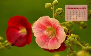 2019年7月日历五颜六色花朵壁纸