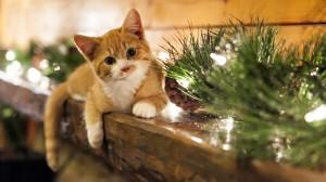 猫咪萌宠可爱软萌图片壁纸