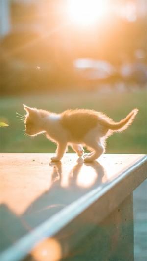 唯美软萌的猫咪图片手机壁纸