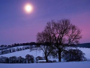 皎洁月光下的美景