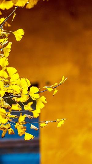 秋天落叶唯美风景手机壁纸