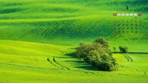 2021年1月清新绿色草原自然风景日历壁纸
