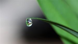 叶子植物上水滴露珠清新唯美养眼高清桌面壁纸