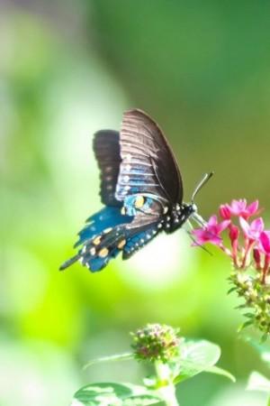 色彩鲜艳的蝴蝶