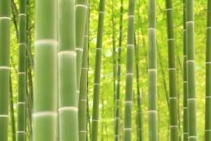 竹林,竹子,竹海,自然竹子风景图片