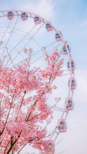 浪漫唯美樱花手机壁纸图片
