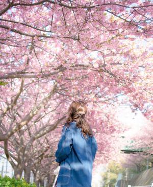 春天樱花下的可爱女孩