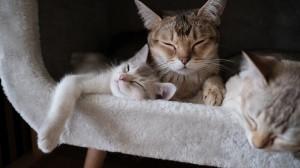 呆萌可爱小猫咪高清桌面壁纸