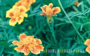 2019年12月清新花卉绿植桌面日历壁纸