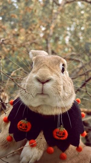 呆萌可爱温顺小兔子图片壁纸