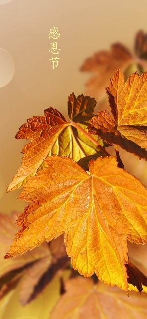 感恩节时金黄色的树叶