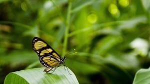 精致好看的蝴蝶图片桌面壁纸