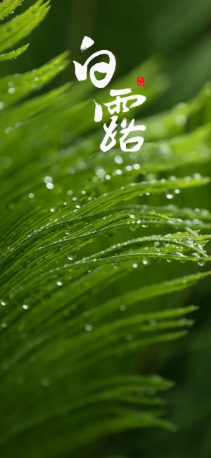 白露之翠绿欲滴的青草