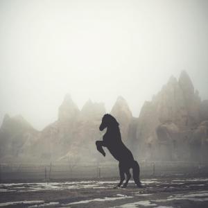 土耳其摄影师拍摄的马
