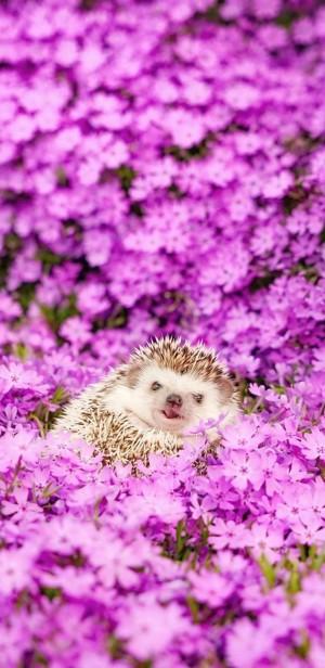 唯美花丛中的可爱呆萌刺猬
