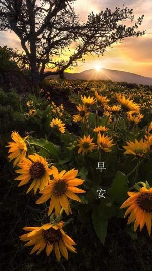 早安唯美清新风景图片壁纸