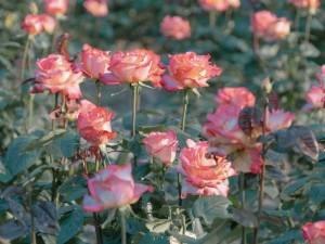 春日迷人的花草高清写真