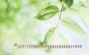 2020年9月夏季护眼绿植桌面日历壁纸
