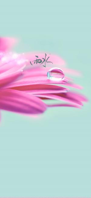 小清新雨水节气之粉色花朵手机壁纸