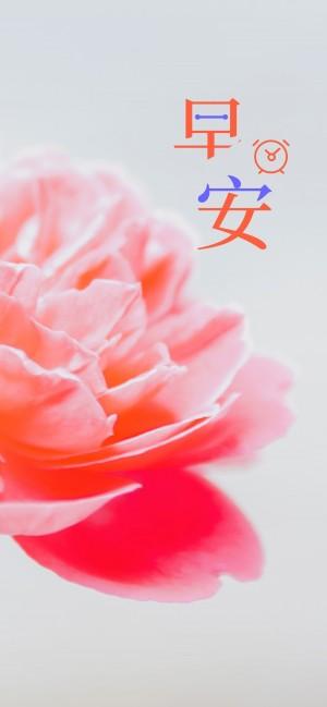 早安你好之粉色的花瓣图片
