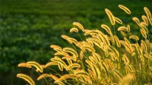 野外清新绿色养眼植物高清桌面壁纸