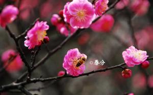 24节气之春分清新图片