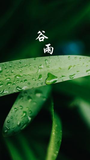 中国传统节气谷雨