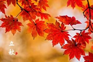 立秋之枫叶美景