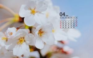 2021年4月唯美樱花日历壁纸图片