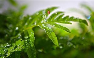 中国二十四节气中谷雨