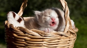 超软萌的小猫咪