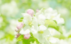 LOMO风格清新淡雅的花卉图片