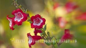 2020年11月黄色花朵植物花卉优美桌面日历壁纸