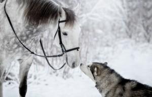 超越物种的搞笑爱情