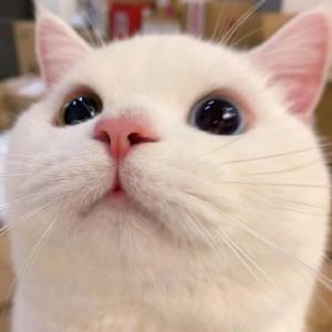 软萌可爱的猫脸头像图片